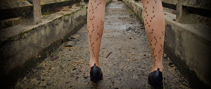 formicophilie-amour-insectes-obsession-addict-4